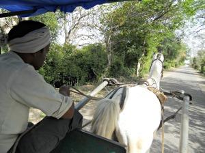 horse drawn carriage at Bharatpur bird park